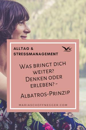 Was bringt dich weiter? Denken oder erleben? – Albatros-Prinzip